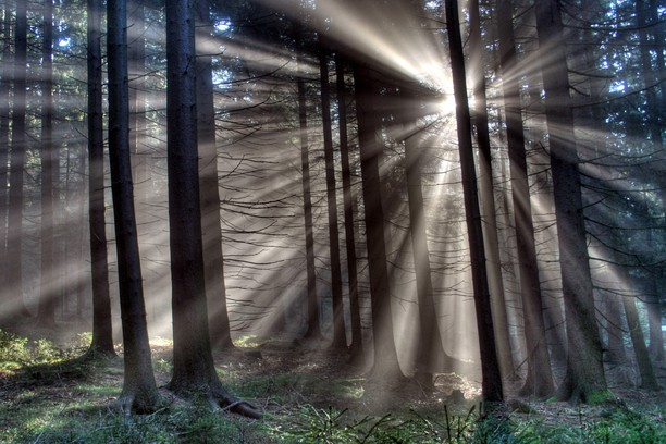 trees with light through