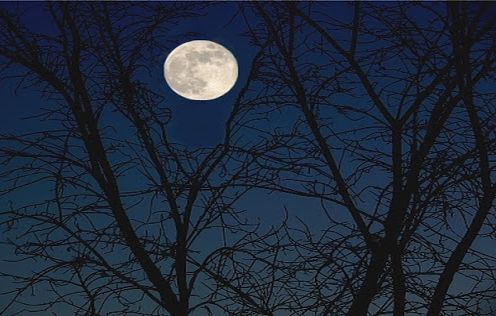 poachers moon