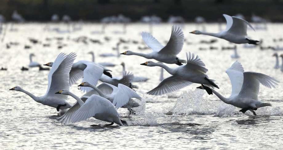 birds rising