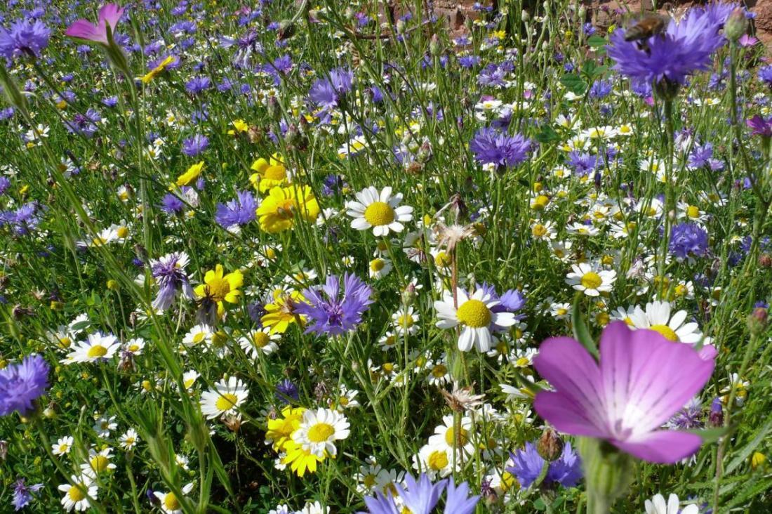 spring hedgrow